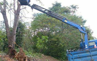 Dapat Informasi Pohon Tumbang, BP Batam Langsung Terjun ke Lapangan dan Evakuasi