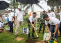 Peduli Lingkungan, bright PLN Batam Tanam 200 Pohon Tabebuya di Sijantung