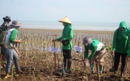Emak-emak Kodim Pati Ikut Menanam Mangrove di Pesisir Pantai Desa Pertomulyo
