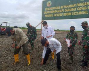 Bupati Rohil Tanam Bibit Jagung di Kecamatan Kubu Babusalam