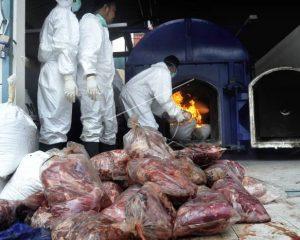 Marak Daging Babi Ilegal, MUI Minta Polisi Berani Tindak Tegas