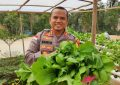 Tanaman Hidroponik Kembangkan Produksi Bahan Pangan Mandiri