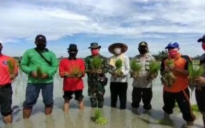 Masyarakat dan Petani Pematang Sikek Gotong Royong Menanam Padi