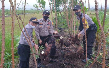 Jaga Kestabilitasan Ketahanan Pangan, Polsek Daik Lingga Panen Perdana