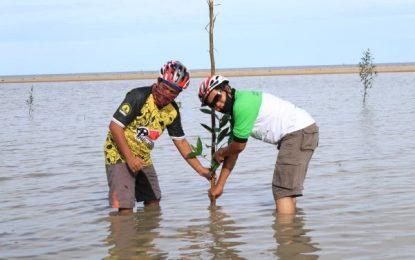 Cegah Abrasi, TCC Kundur Bersama HIMAP2K Pekanbaru Tanam Pohon Mangrove